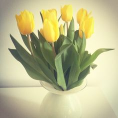 #yellow #tulips | fotonda.de