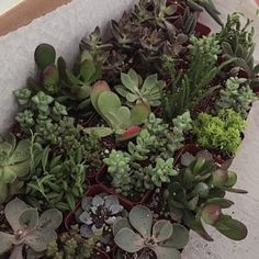 Melissa Ooi added a photo of their purchase Wholesale Succulents, Succulent Favors, Succulent Arrangements, Fairies, Miniatures, Handmade Gifts, Plants, Vintage, Etsy