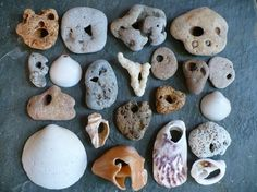 And shells Hag Stones, Driftwood, Vikings, Mystery, Shells, Objects, Collections, Beach, Places