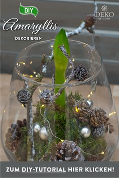 DIY: with a little moss, twigs and cones, amaryllis can be beautifully staged! The tuber of amaryllis cast in wax offers even more decoration options. You can find the DIY instructions with tips for d Diy Christmas Decorations, Stage Decorations, Christmas Diy, Christmas Bulbs, Xmas, Holiday Decor, Winter Flowers, Diy Flowers, Diy 3d