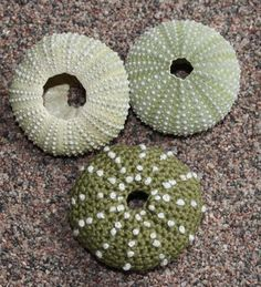 This crochet pattern will instruct you on how to crochet up my pattern –Sea Urchins This is a pattern for 6 different sea urchins: green sea urchin,