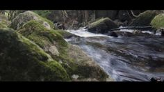 Video with use of sliders to capture flowing water and forest