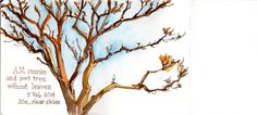 Poro Tree, Costa Rica   출처: crclapiz