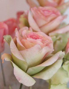 Sugar Roses by Filiz Bircan