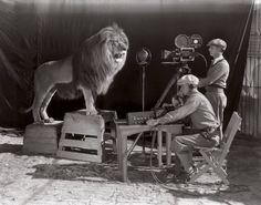 The Actual MGM Lion Being Filmed, 1924.