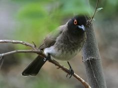 Carryblaire River Retreat is a registered bird sanctuary & boasts approximately 450 species of birds in the area. Free State, Bird Species, Travel Tips, Birds, Tours, River, Travel Advice, Bird, Rivers