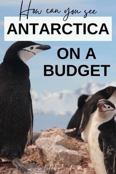 Is it possible to visit Antarctica on a budget? As a digital nomad and full-time traveler, I work on finding the cheapest possible ways to travel. In this slightly different video, I break down how I got a great last-minute deal to the Antarctic and what isn't included in the cost as part of my budget travel tips. #antarctica|antarctica travel|antarctica on budget|antarctica cruise|budget tips for Antarctica