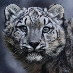 Snow Leopard Cub Painting - Original Oil on Canvas - Jason Morgan UK USA