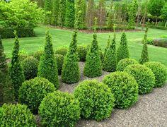 Kompozycja roślin zimozielonych jest efektowna przez cały rok