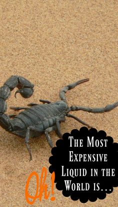 Wanna get rich in the most dangerous way possible? – Oh, my! That's interesting| Random Fun Facts