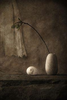 ♂ Still Life moonsnail, traitement de Joan Kocak
