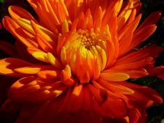 flowers-orange-01