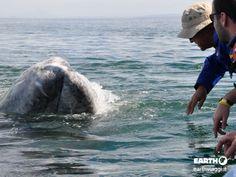 Incontro con la balena, Baja #California.