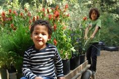 Descanso Gardens, Pasadena - Flowers, a forest, story time, Train ride
