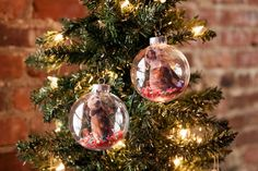 5 Holiday DIY Ideas for Pet Lovers via Brit + Co