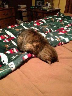 sono stanco morto...