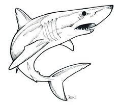 mako shark - Google Search