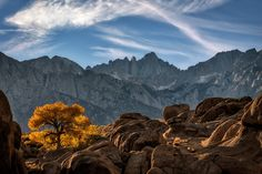 Here is one from Lone Pine.  In the background is Mount Whitney, the highest summit in the Sierra Nevada, and contiguous United States with an elevation of 14,505 feet. The area behind the foreground rocks and tree is the famous Alabama Hills place where tons of Western type of movies were shot.