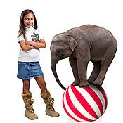 Circus Elephant Standee and other circus themed decor