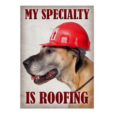 Zazzle LOL Posters - Great Dane wearing a red construction helmet. Use the code LOLPRFCTPOST for 53% off!