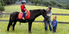 The Corsican is a small horse, standing between 1.30 and 1.50 metres (12.3 and 14.3 hands) at the withers and weighing 300–400 kg. The coat colour may be black, seal brown, or any shade of bay; minimal white markings are tolerated. The head is relatively short, sometimes heavy, with a straight profile. The body is compact, with a short and sloping croup. The legs are fine, with small hard hooves. Horse-riding
