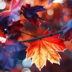 iPhone - Autumn