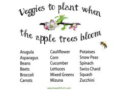 Permalink to: Veggies To Plant When The Apple Trees Bloom. And Other Garden Wisdoms.