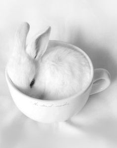 "the-eternal-moonshine: ""Cup Of Bunnee """