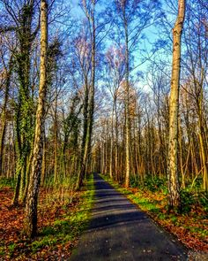 Late fall woods in the afternoon (Hanover, Germany) by Frank-Michael Preuss (@fmpreuss) on Instagram