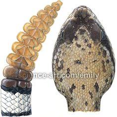 Diamondback rattlesnake head and rattle - Illustration@Science-Art.Com