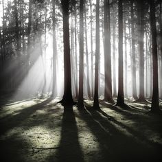 Wald by Jürgen Heckel, via Behance