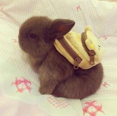 Having a bad day? Bunny with a backpack. Problem solved.