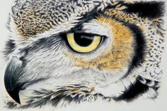 Tackle feathers in this #portrait of an owl in #colouredpencils by Jon Newey. Coming soon to ArtTutor.com