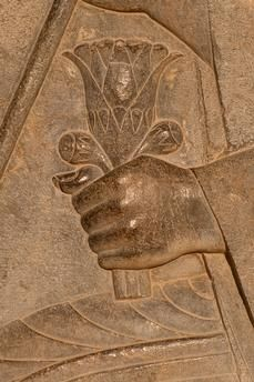 Persepolis – Takht-e Jamshid (Fars Province, Iran), palace complex of Darius I (Achaemenid, century BC). Detail from a relief: a dignitary holding lotus flowers Ancient Persian, Ancient Art, Ancient History, Art History, Ancient Mesopotamia, Ancient Civilizations, Shiraz Iran, Achaemenid, Iranian Art