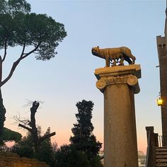 The columns of today in Rome still pay tribute to the origins of the ancient city of Rome Romulus And Remus, Pinterest Projects, Columns, Troy, Origins, Wolf, Lion Sculpture, Elephant, Statue