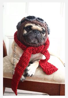 If I had a pug. Yes, yes I would crochet him things and dress him up all fancy like.