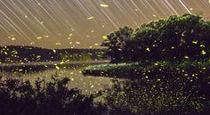 O voo dos vaga-lumes no lago Ozarks em Michigan - Vincent Brady