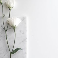 Read White Aesthetic from the story Colour/Aesthetic Themes by epiphanydjh (anna🌻) with reads. Aesthetic Colors, Flower Aesthetic, White Aesthetic, Music Aesthetic, Aesthetic Grunge, Aesthetic Light, Rainbow Aesthetic, Aesthetic Pictures, White Feed