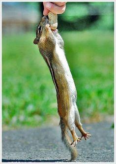 Cute Squirrels | Cute-Squirrels-wild-animals-7675684-700-989.jpg#cute%20pictures%20of ...
