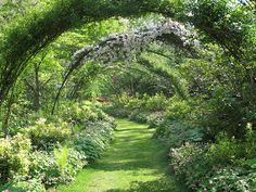 rebar arches covered in wisteria; curving grass path
