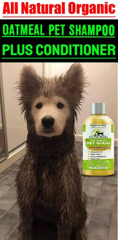 Our Oatmeal Dog Shampoo And Conditioner is recommended by Vets and Specially formulated for pets with allergies to food, grass and flea bites. Oatmeal Shampoo, Cat Shampoo, Shampoo And Conditioner, Dog Smells, Natural Vitamin E, Flea Treatment, Dog Eyes, Aloe Vera Gel, Biodegradable Products