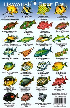 The crazy thing is that these illustrations dont even do most of them justice. Saltwater Fish Tanks, Saltwater Aquarium, Aquariums, Fish Chart, Moving To Hawaii, Maui Vacation, Marine Biology, Ocean Creatures, Hawaiian Islands
