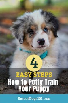 Do these simple steps when potty training your puppy and stop worrying about the never ending accidents inside the house! Puppy Potty Training Tips, Rescue Puppies, Dog Pee, New Puppy, Go Outside, Corgi, Simple, House, Animals