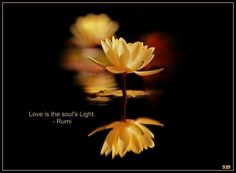 Love is the soul's light ~ Rumi