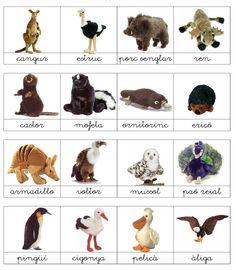 vocabulari d'animals - Buscar con Google Darwin, Valencia, Book Worms, Google, Esports, Natural, Dog Cat, Alphabet, Catalan Language
