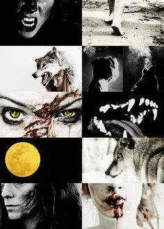 """Werewolf -  A werewolf, also known as a lycanthrope (from the Greek λυκάνθρωπος: λύκος, lykos, """"wolf"""", and ἄνθρωπος, anthrōpos, """"man""""), is a mythological or folkloric human with the ability to shapeshift into a wolf or a therianthropic hybrid wolf-like creature, either purposely or after being placed under a curse or affliction (e.g. via a bite or scratch from another werewolf). Early sources for belief in lycanthropy are Petronius and Gervase of Tilbury."""