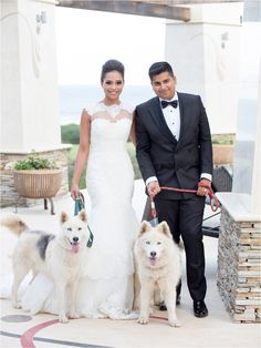 Post Wedding Shoot, Durban, Huskies