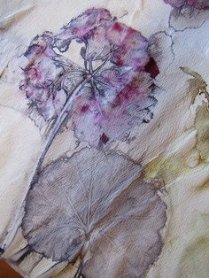 Geranium Print on Water Color Paper, Paul T. | Flickr - Photo Sharing!