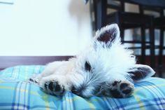 sleepy time #westy