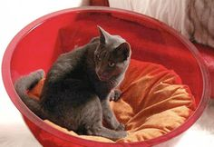 Modern Cat Furniture Design Ideas, Wall Mounted and Heated Beds